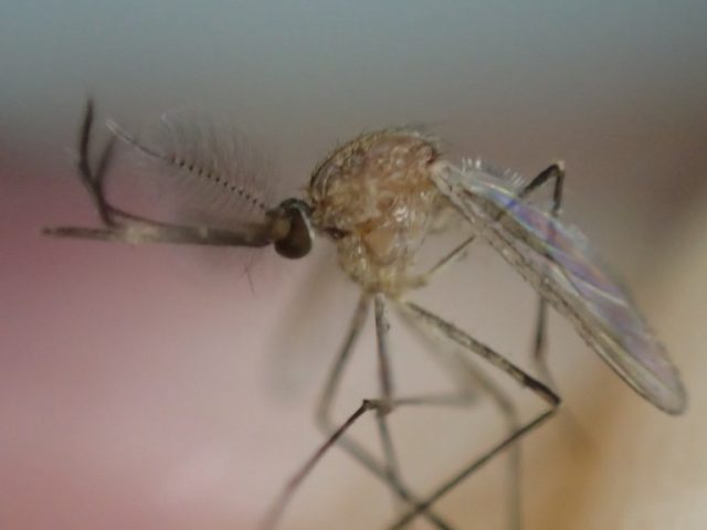 蚊に刺されやすい原因は酸性体質?知っておきたいチェックと対策方法がコレ!
