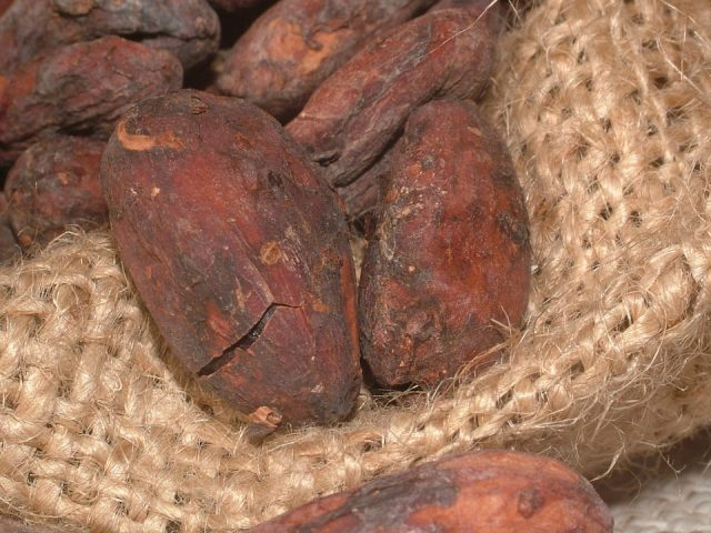 cacao-beans-91083_960_720