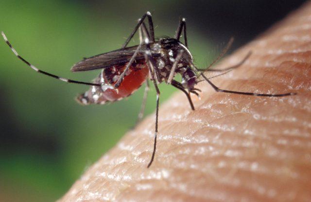 蚊に刺されやすい 体質 対策