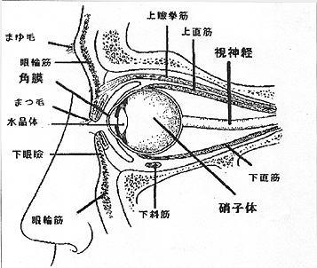 根津甚八さん肺炎にて死去。6回も手術した『下直筋肥大』との関係性は?